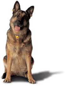 dog_german_shepherd